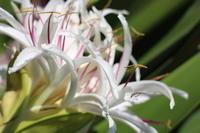 ハワイの音楽 - クラシノカタチ