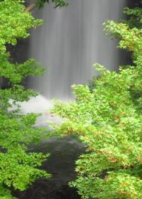 水が育むもの - 長女Yのつれづれ記