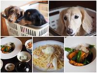 17年7月23日 さくらのお誕生日旅行初日♪ - 旅行犬 さくら 桃子 あんず 日記
