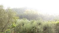 恵みの雨、イタリア ペルージャ - イタリア写真草子 - Fotoblog da Perugia