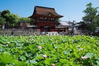 伊賀八幡宮 - 花と風景 Photo blog