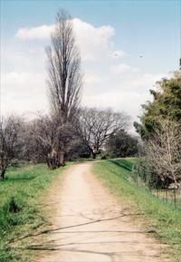 草加あたりを歩く 1 - 散歩日和