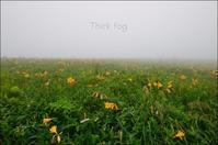 深い霧の中 - ハーブガーデン便り