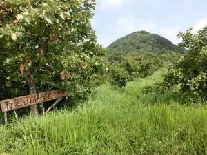 No471 岡山・湯原温泉の裏山雨乞山 - みちくさおじさん山を歩く