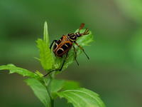奥日光にいた昆虫 - コーヒー党の野鳥と自然 パート2