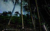 2017年 ホタルの舞い - フユビヨリ