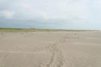 ウミガメの足跡 - 東に向かえば海がある