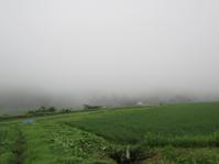草取り三昧 - 南阿蘇 手づくり農園 菜の風