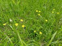 夏の尾瀬沼⑥ 尾瀬で出会った花~続き~  - 風の彩り-2