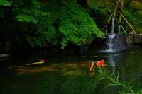 鎌倉の長谷寺へお散歩 - ルンコたんとワタシの心模様