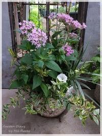 """Favorite Container from """"Favoritos"""" - Garden Diary"""