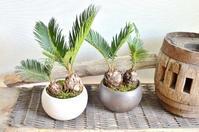 8月 植物のワークショップのご案内 - Kitowaの日々