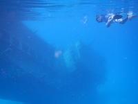 モルディブ沈潜ポイント ヴァ-ヴ環礁 - モルディブをお得に賢く旅する!ローカル島現地情報発信ブログ
