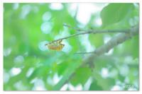 夏へ。 - Yuruyuru Photograph