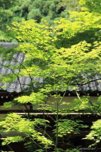 旧佐伯邸日本庭園 - 今日の空+α2