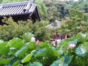 この暑さはまさに日本の夏 - 60歳からの青春2