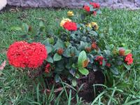 お庭のお花たち - 悠悠生活 in Mexico