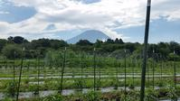 大暑のてふてふ - 富士のふもとの農業日誌