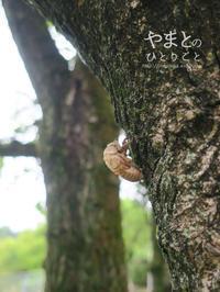 セミの抜け殻 - yamatoのひとりごと