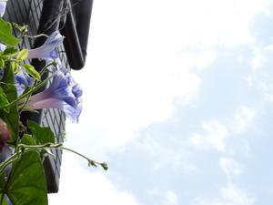 暑い最中に花壇作業 -