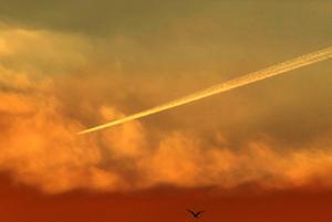 『上空1万mの飛行機雲を600㎜の多重露出で』 -