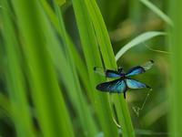 蝶が足りない - M2_pictlog