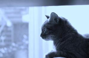青ざめる猫たち - Still Life