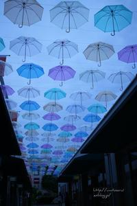 傘の咲く - 一瞬をみつめて