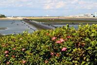 花と絡める - 南の島の飛行機日記