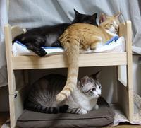 IKEAペット(ベッド)劇場 - ぎんネコ☆はうす