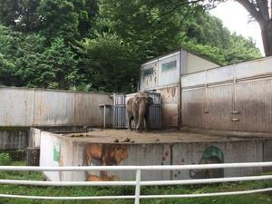 宮子 という象がいる / Named Miyako at Utsunomiya Zoo - 象を読む人 象を書く人