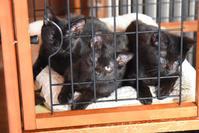 めざせ黒猫マスターへの道 その4 - りきの毎日