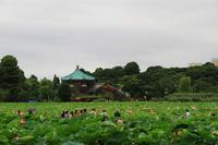蓮池 - お散歩写真     O-edo line