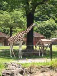 のいち動物園 - スール