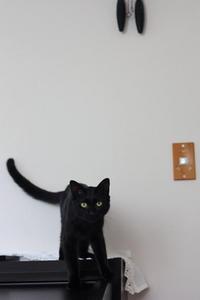 保護猫の記録⑧ - 小さな森のキキとサラ