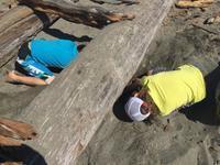 短いシアトルの夏はビーチで過ごさなくっちゃ - 若葉庵