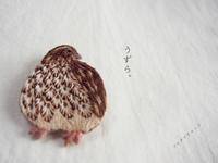 うずらの刺繍ブローチ - マルチナチャッコ