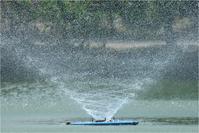 水鳥たちの楽園 - とことんデジカメ