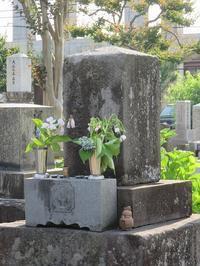 河井継之助(つぎのすけ)死す(北越戦争レポート⑭) - 気ままに江戸♪  散歩・味・読書の記録