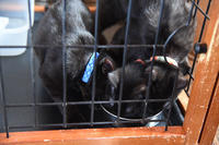 めざせ黒猫マスターへの道 その5 命名! - りきの毎日