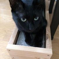 保護猫の記録⑨里親募集 - 小さな森のキキとサラ