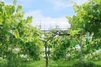 草刈り 正式名はトラちゃん田んぼ - 葡萄と田舎時間