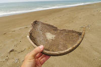 おぼんの欠片・・・ - Beachcomber's Logbook