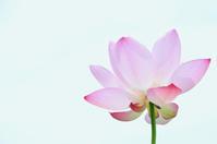 夏の花 - pas de deux