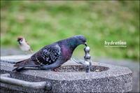 水分補給 - 和む由もがな