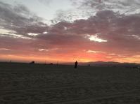 LAならではの、心の癒し♪ - ロサンゼルス留学センター公式Blog          憧れのアメリカ西海岸でロサンゼルス留学♪