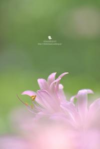 匂い - お花びより
