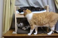 IKEAベッド(ペット)劇場 - ぎんネコ☆はうす