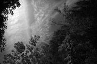 夏の空、夏の木漏れ日、夏のプラタナス - Yoshi-A の写真の楽しみ