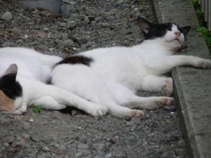 お外ネコの夏 - ちょっとネコばか